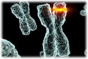 naturegenetics